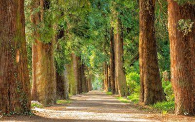 "Ephesians: ""The Way We Walk"" (I)"